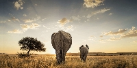 South African Splendor - African Travel
